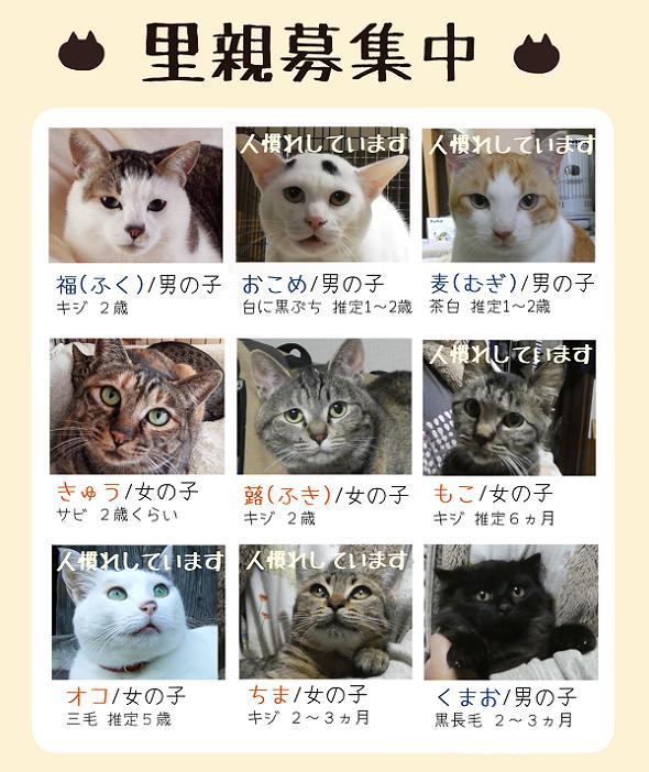 ポスター案3.png
